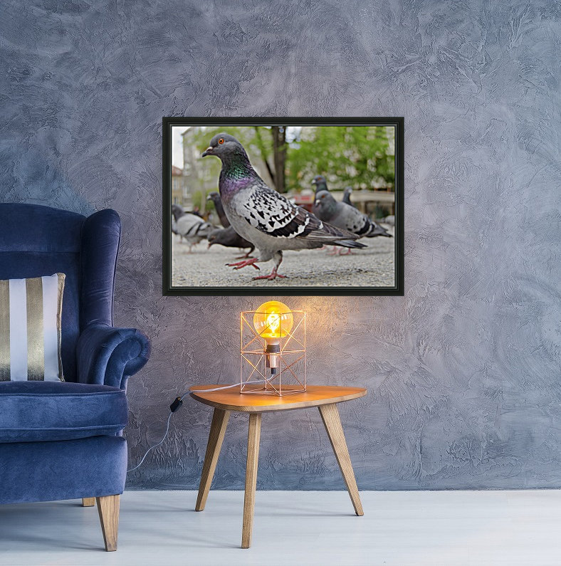 Pigeon in the park  Art