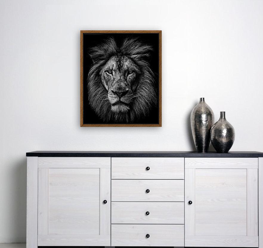 A Lion in Black & White  Art