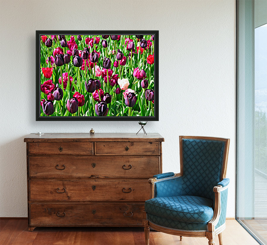 Field of Tulips with Floating Frame