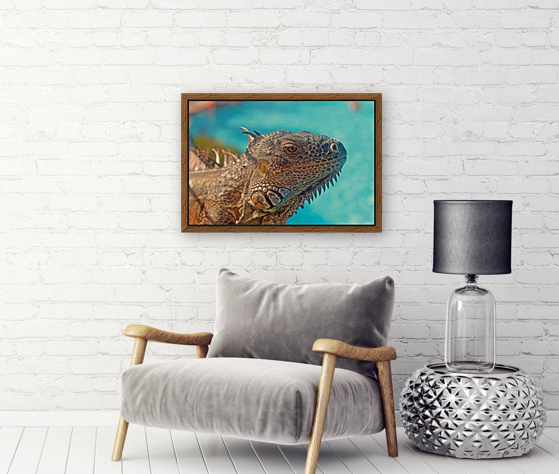 Spiny-Tailed Iguana  Art