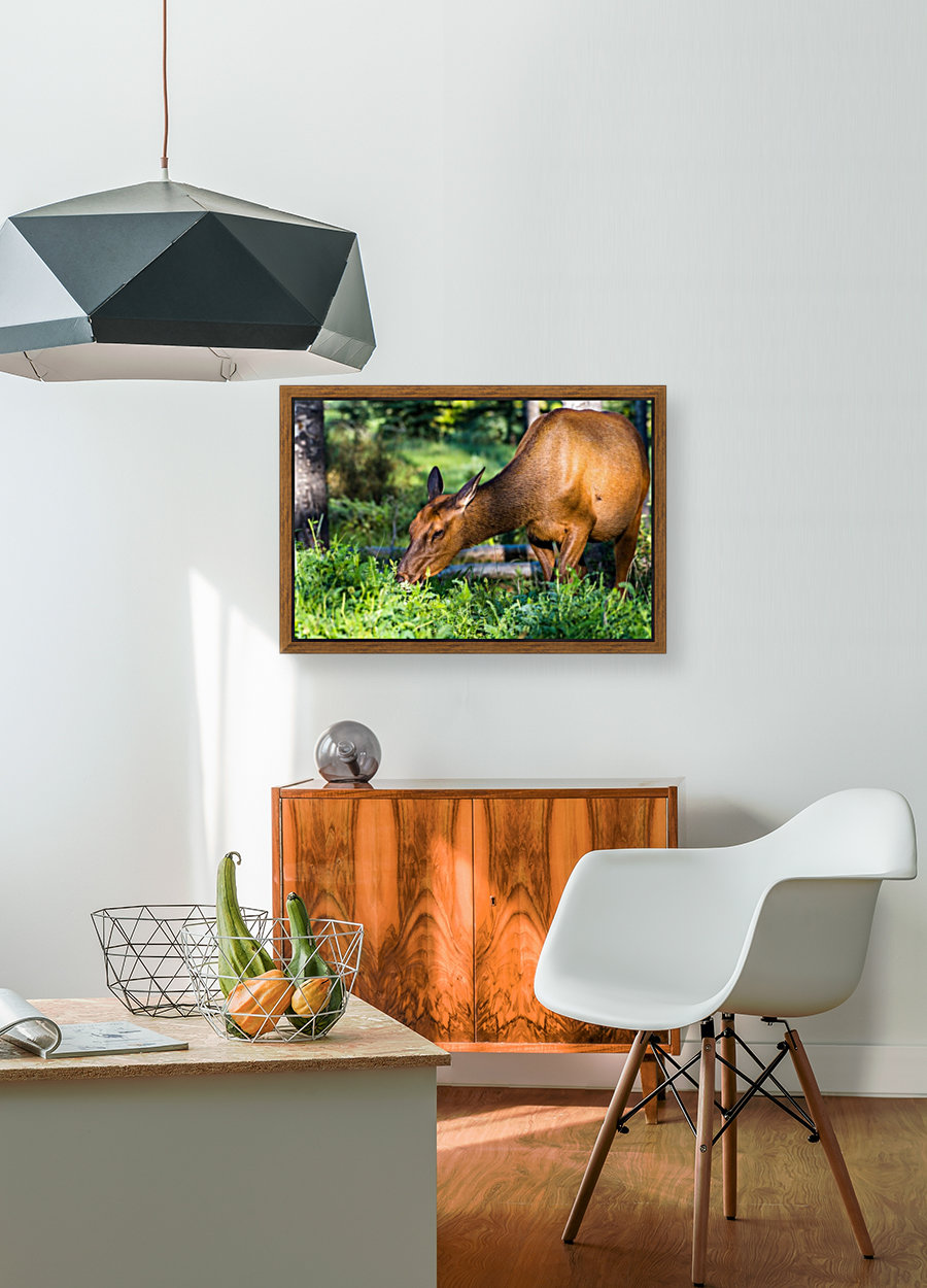 Baby Elk with Floating Frame