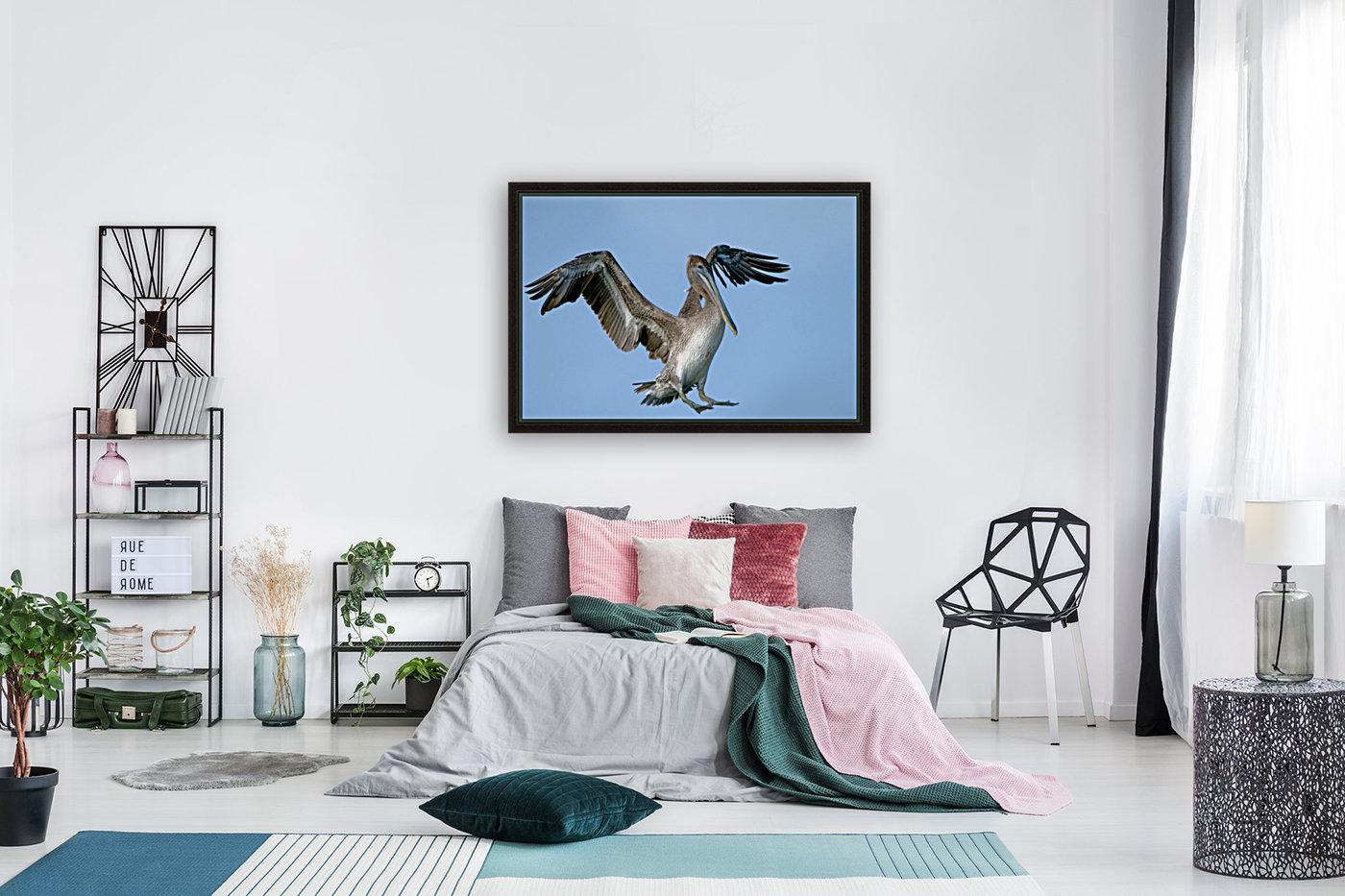 Arriving: Brown Pelican  2509  Art
