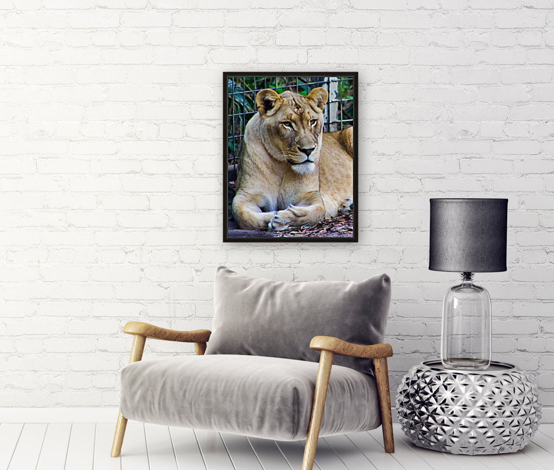 Lioness with Floating Frame