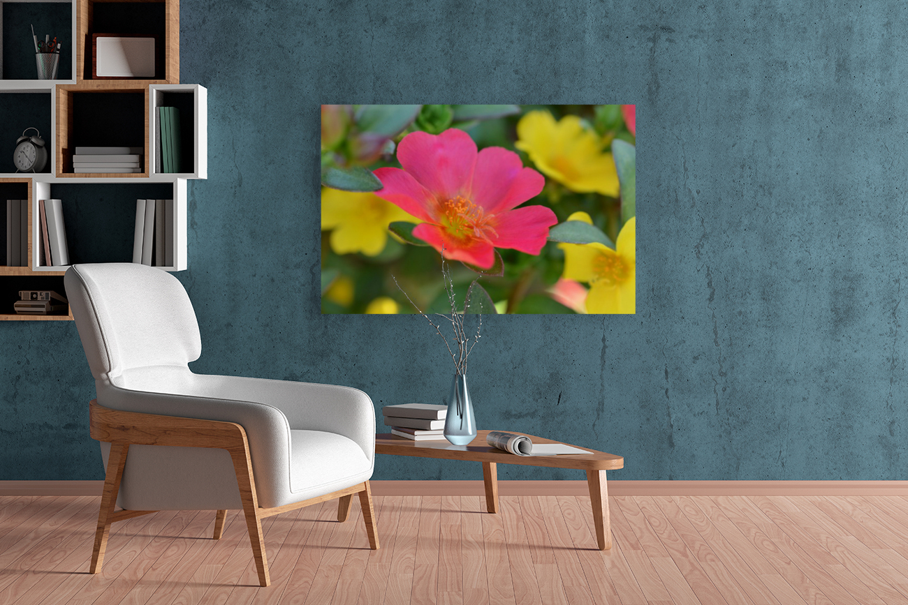 Floral Photography   Art