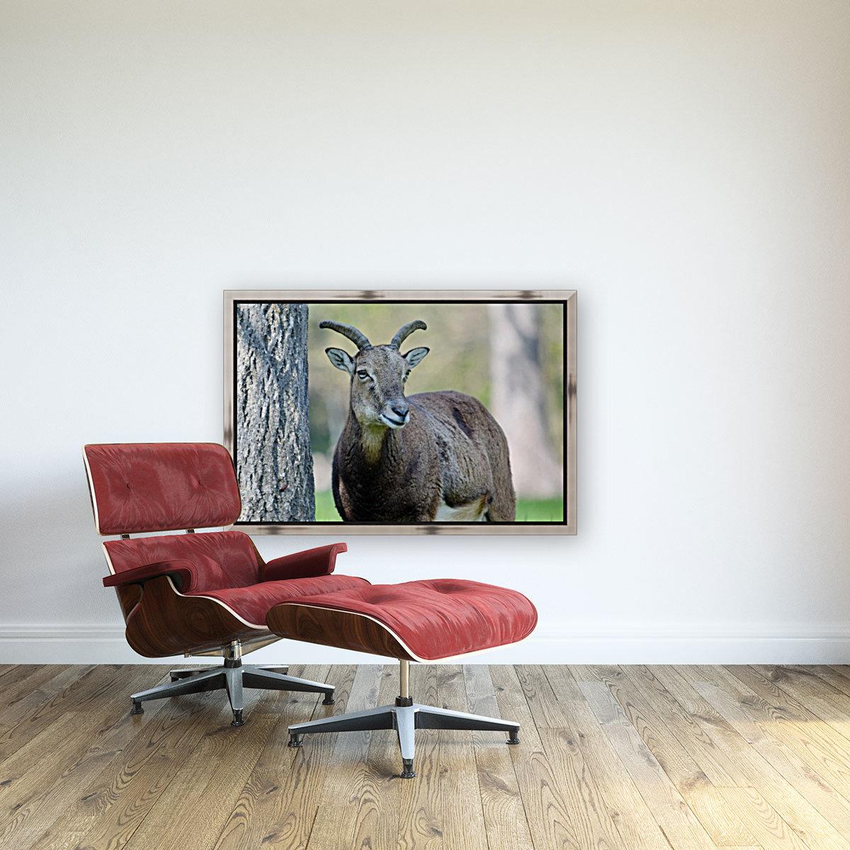 Mouflon in the Forest Portrait  Art