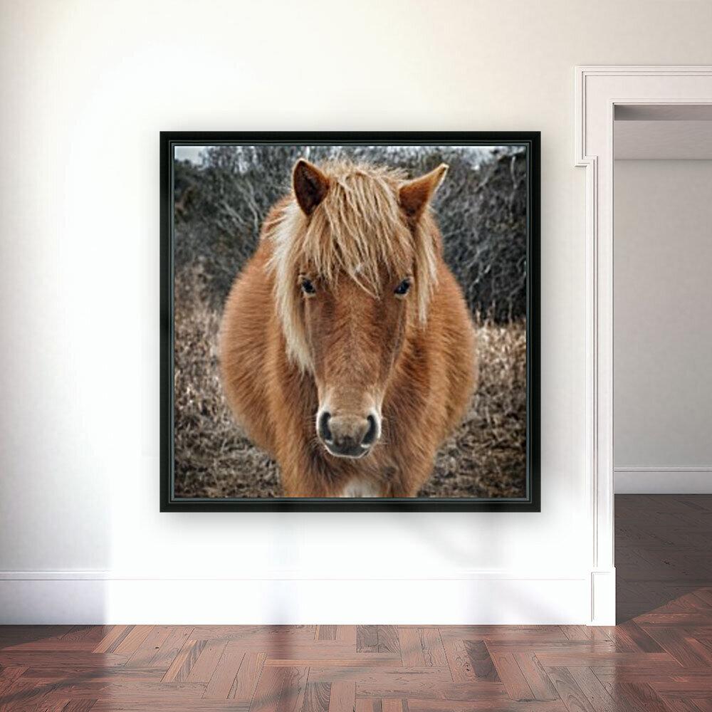 Assateague Horse Miekes NoeLani  Art