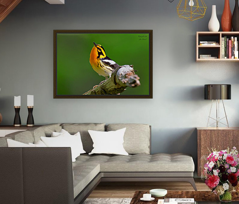 Birds with Floating Frame