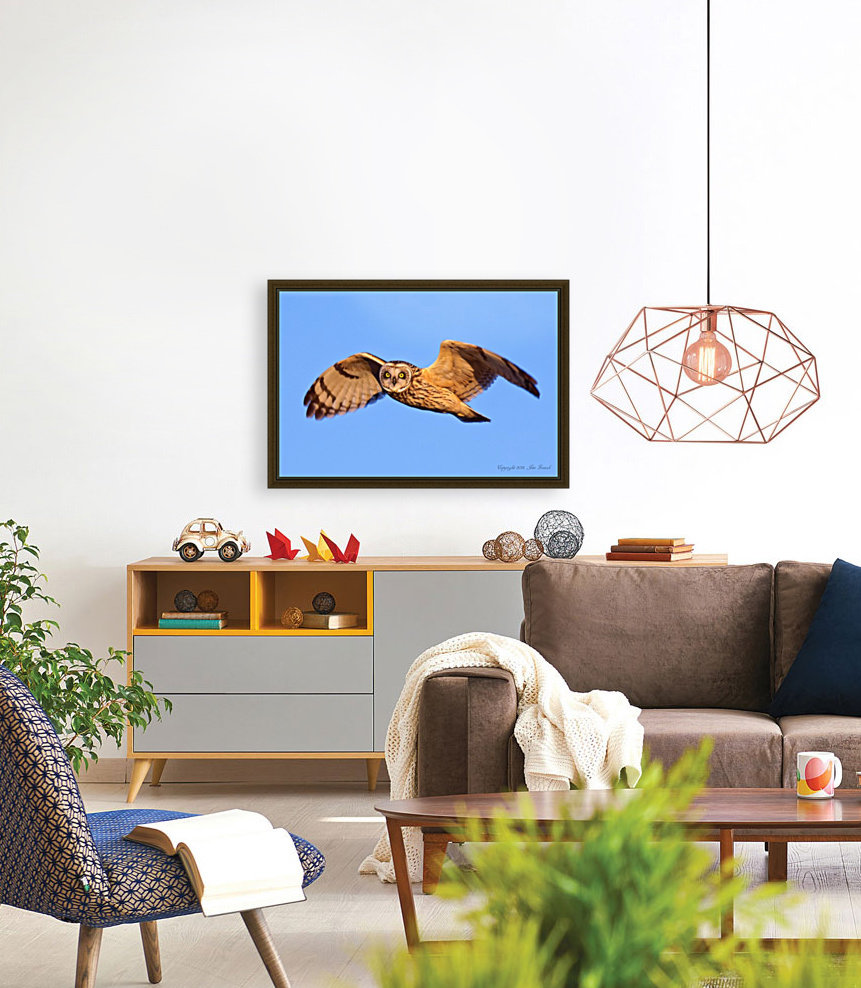 Owls with Floating Frame