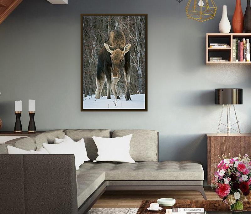 Mr. Moose  Art