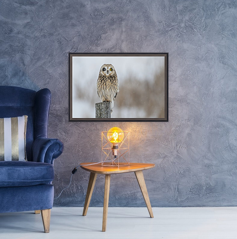 Short Eared Owl - Wink with Floating Frame