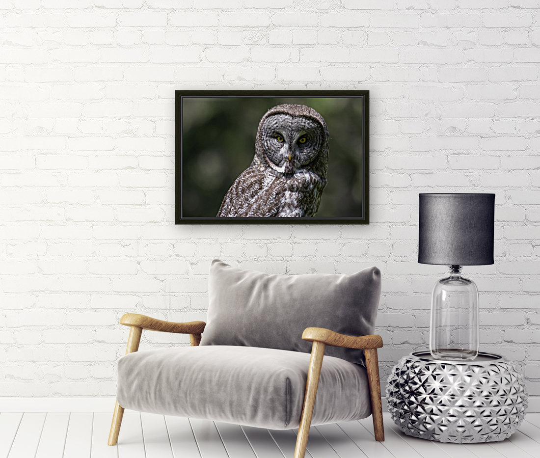 Great Grey Owl - Up close with Floating Frame