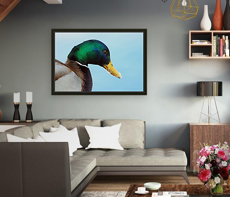 Drake Mallard Portrait II  Art