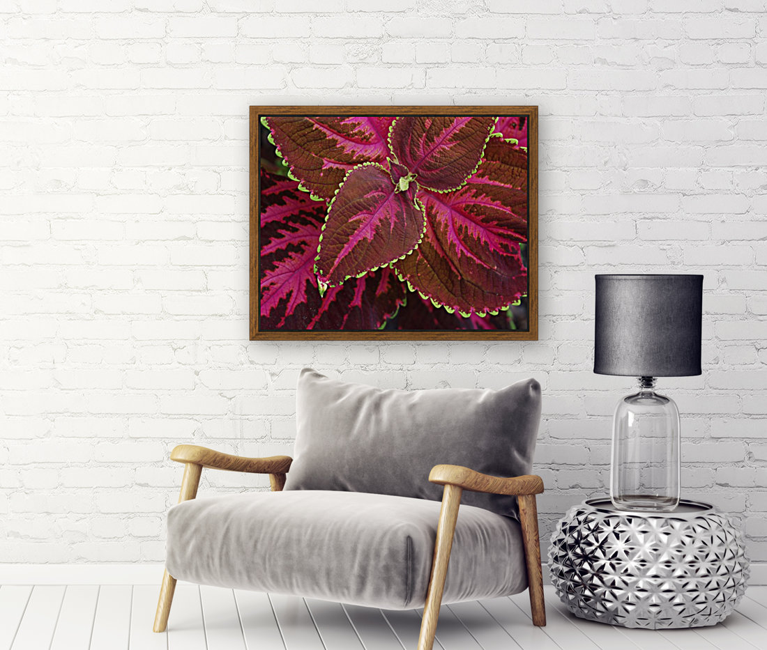 Coleus with Floating Frame