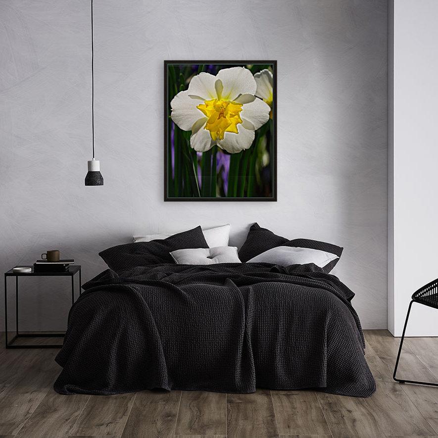 White Daffodil  Art