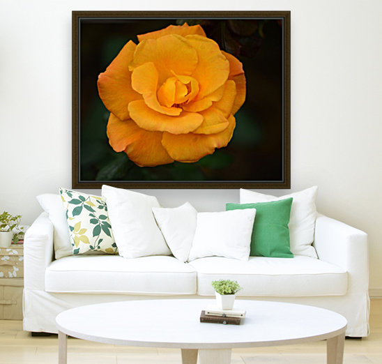 Orange Rose  Art