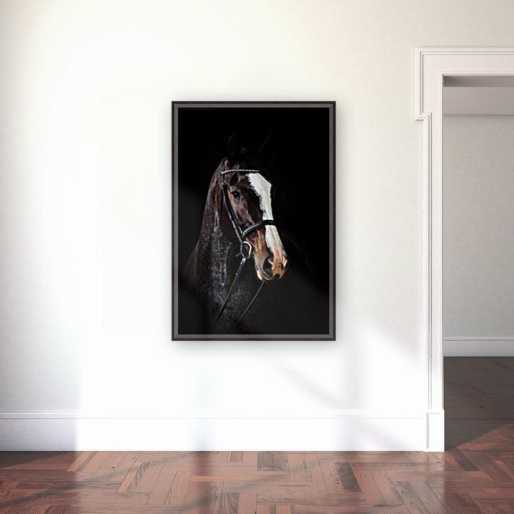 Studio Horses  Art
