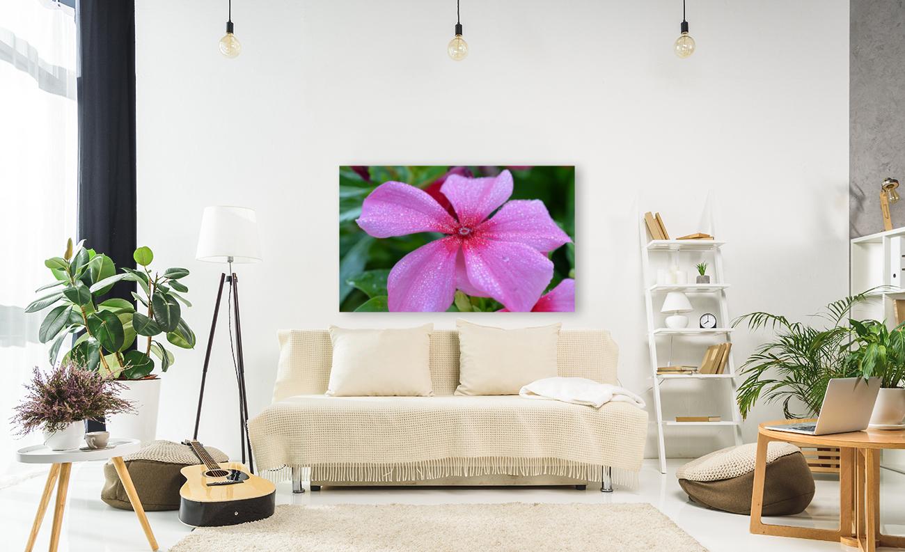 Floral Photograph   Art