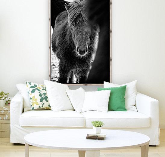 Icelandic Foal  Art