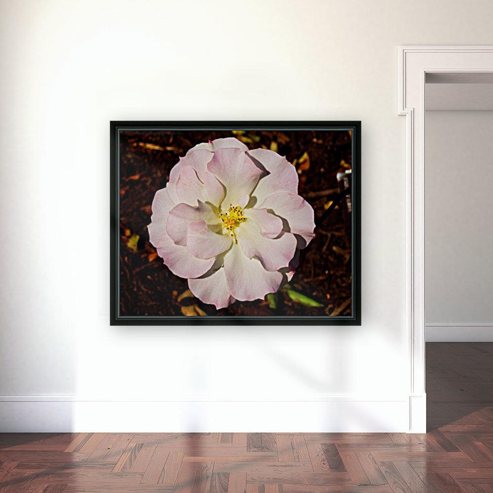Pink Rose 2  Art