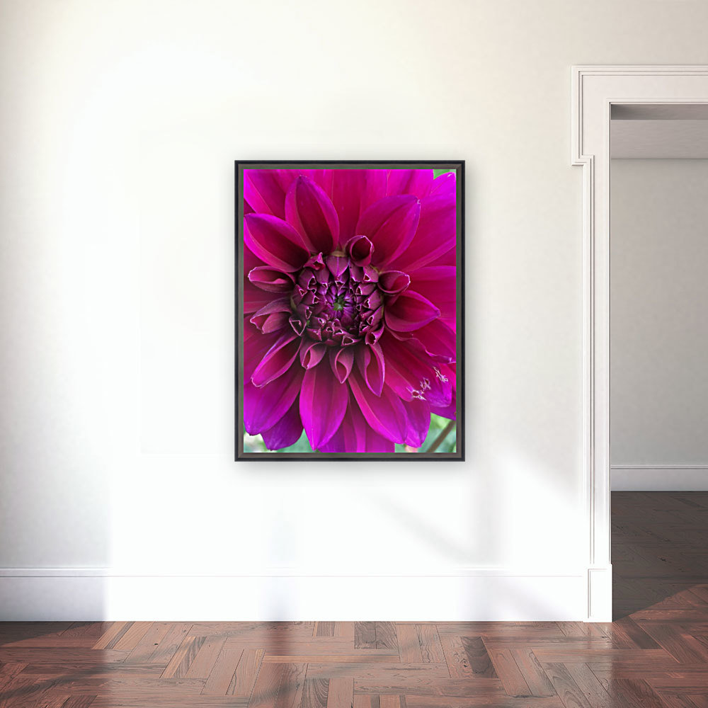 Dahlia with Floating Frame