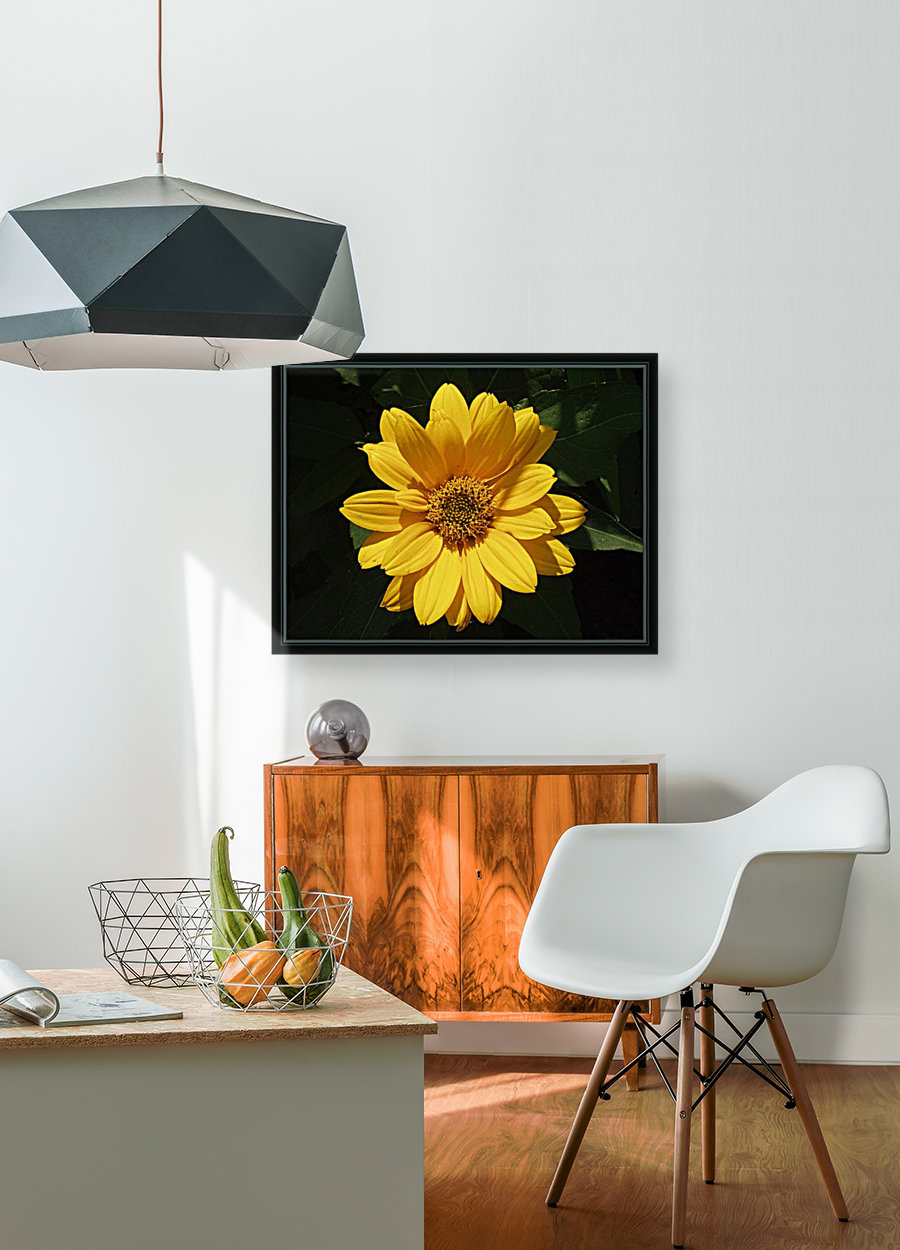 Yellow Zinnia with Floating Frame