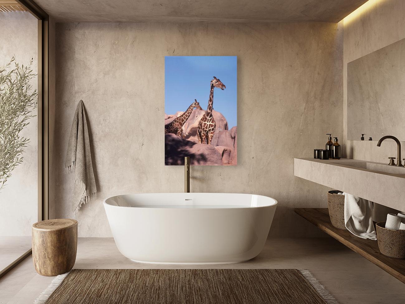 Giraffe Photograph  Art
