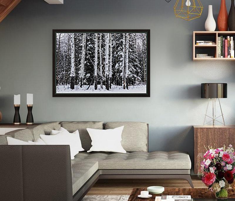 Aspens Snow Blanket Banff National Park  Art