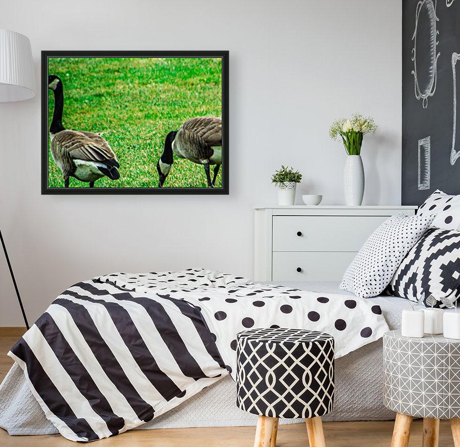 Geese with Floating Frame