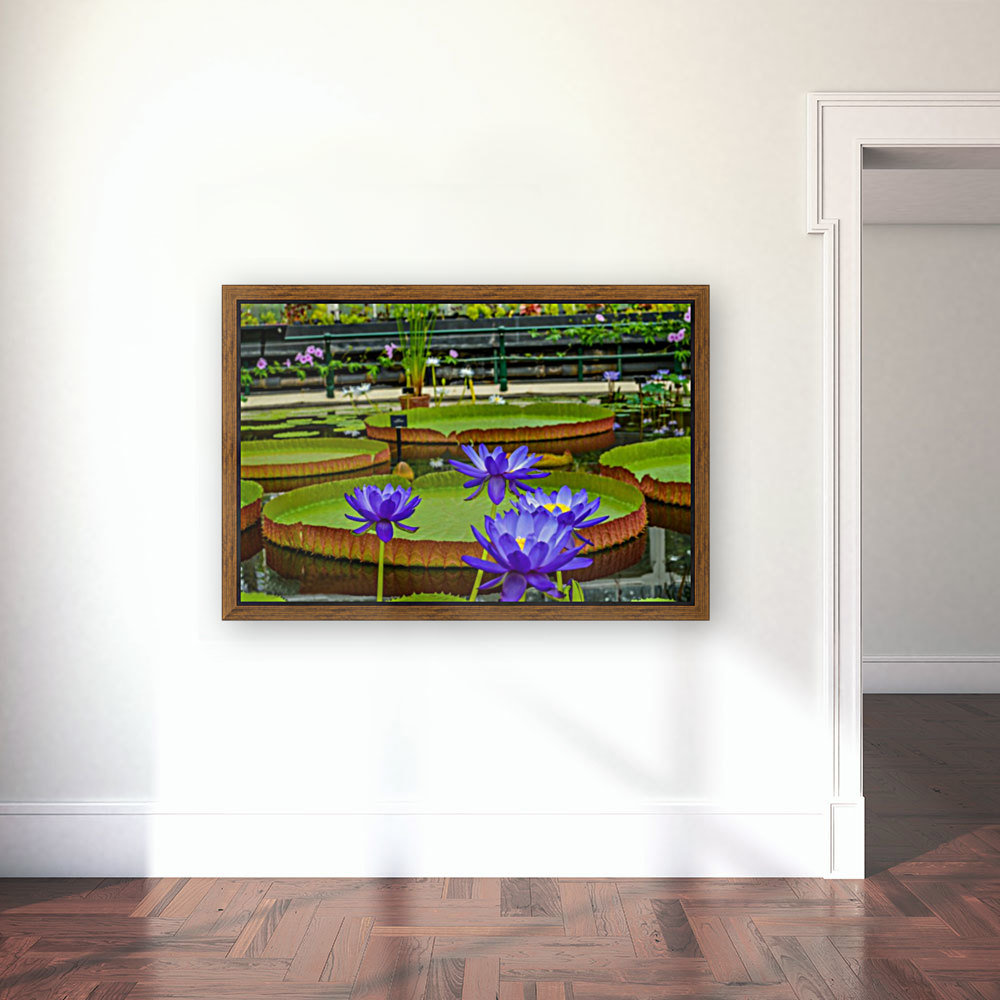 Purple water lily in a pond  Art