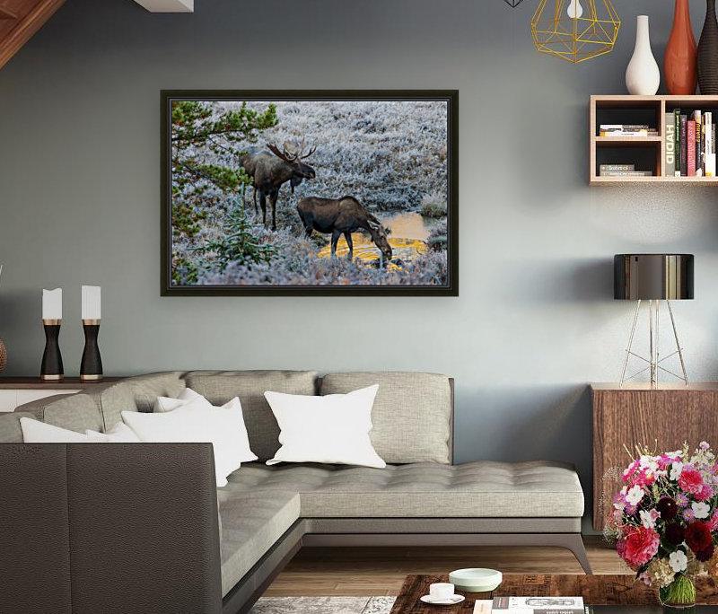 Moose On Golden Pond  Art
