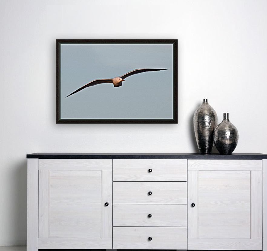 Fly like a Seagull  Art
