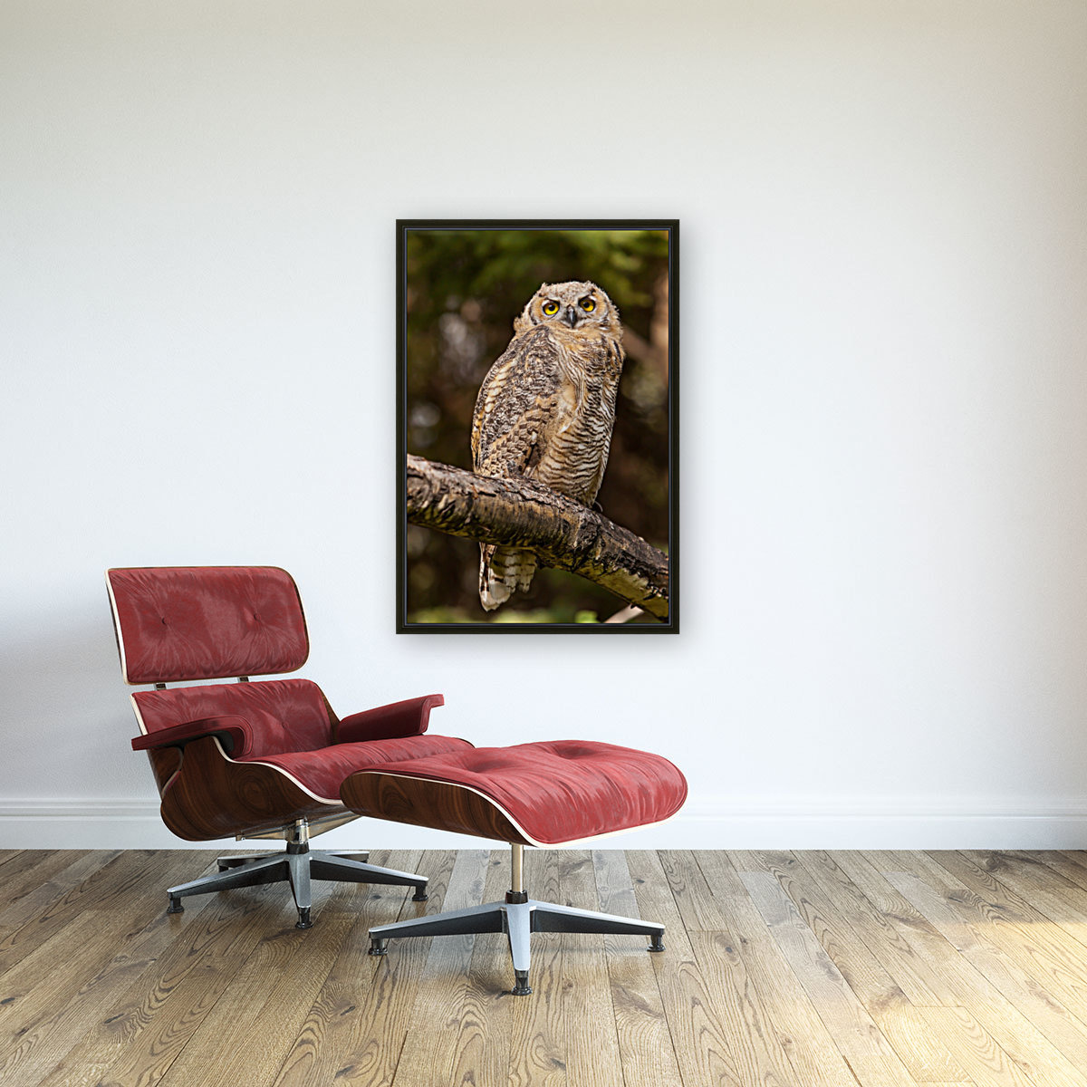 Great Horned Owl with Floating Frame