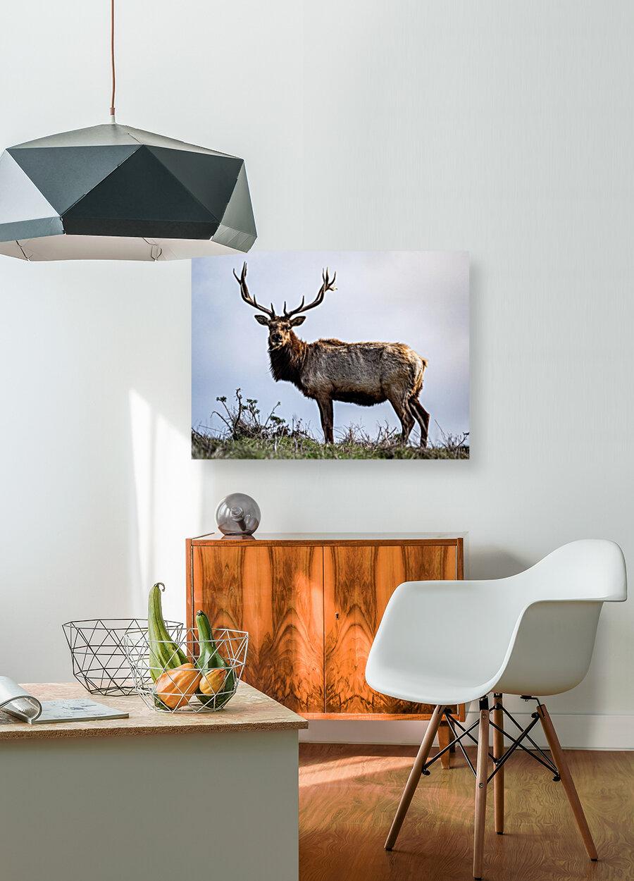 Tule Elk  Art