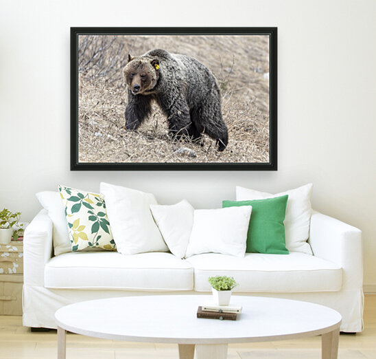 6970 - Grizzly Bear 2160  Art