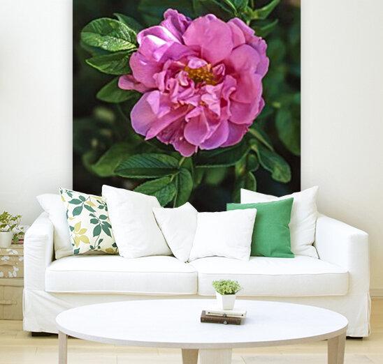 Last Rose of Fall  Art