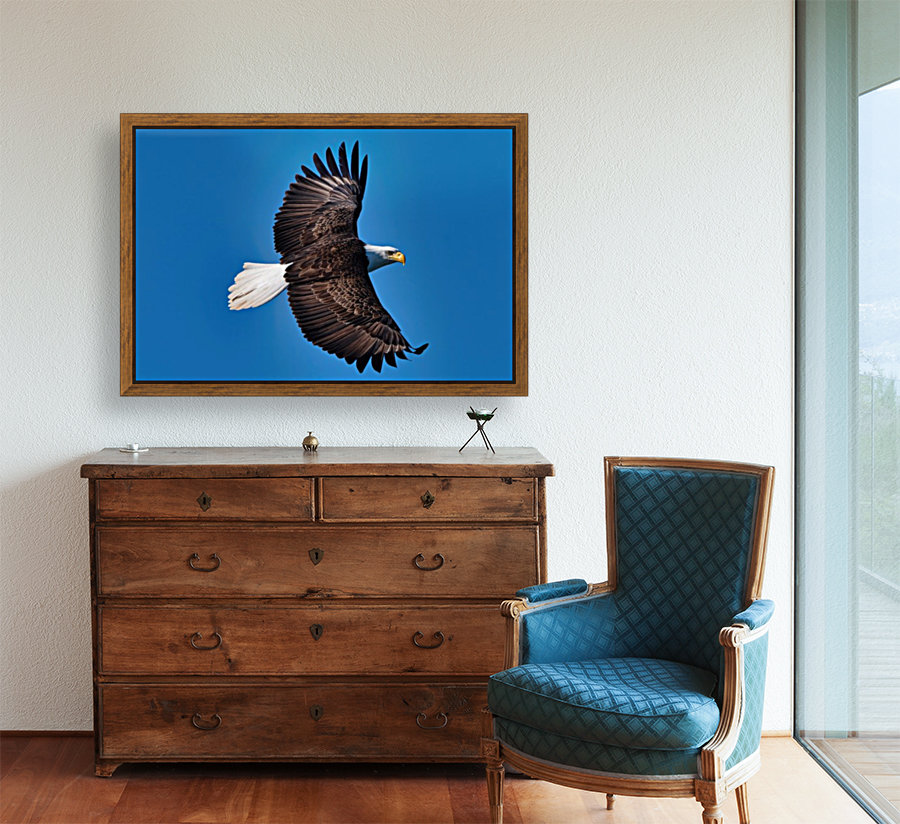 American Bald Eagle with Floating Frame