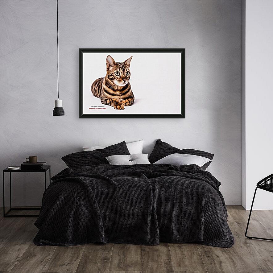 Cat life  Art