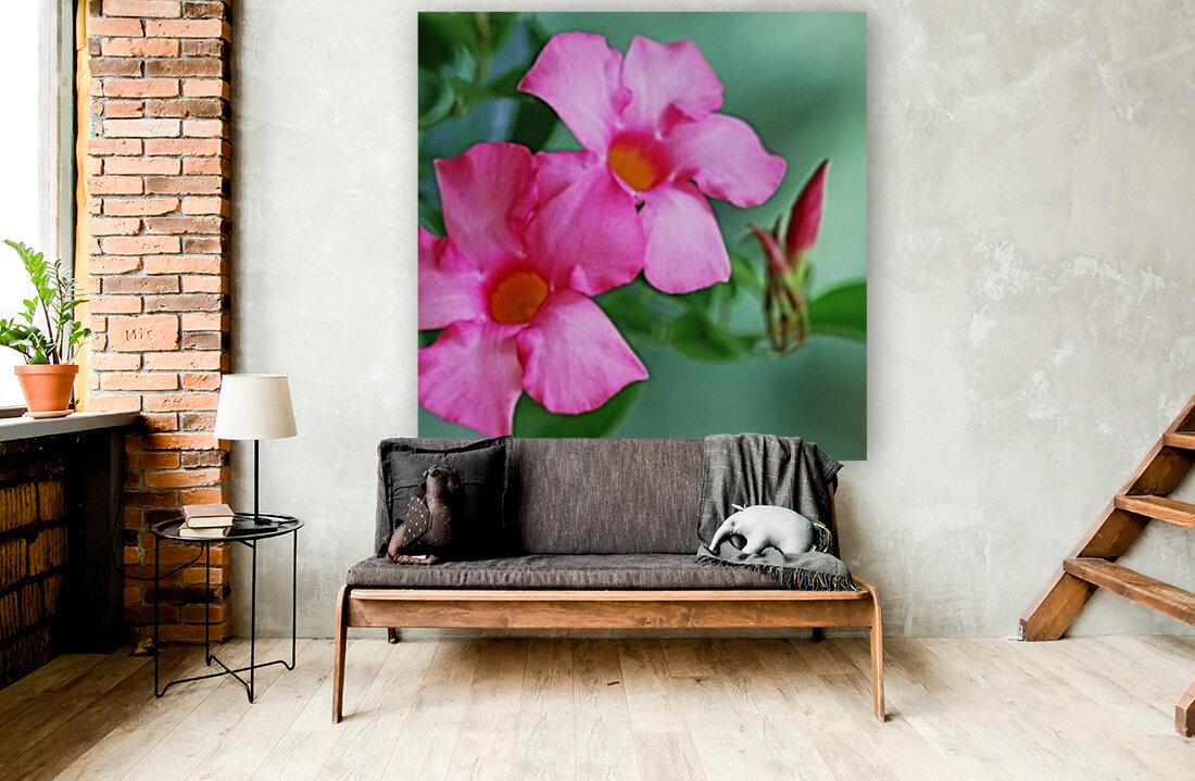 Mandevilla In Pink  Art