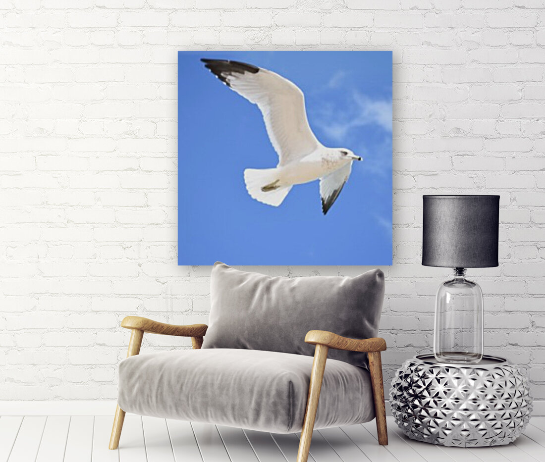 Seagull Overhead  Art