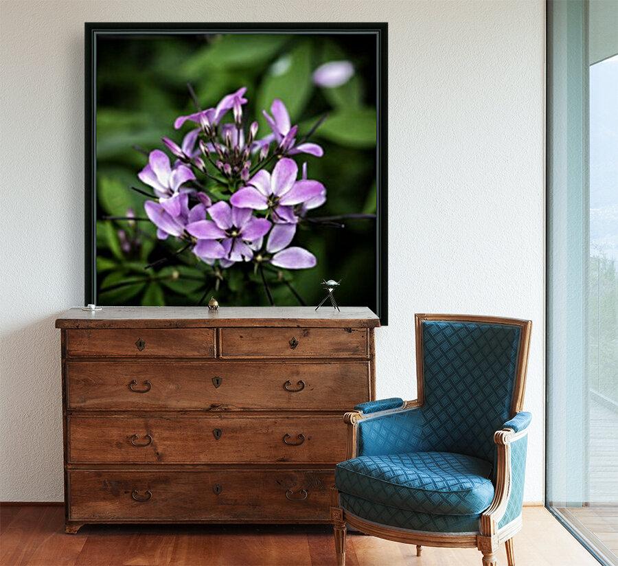 Beeplant  Art