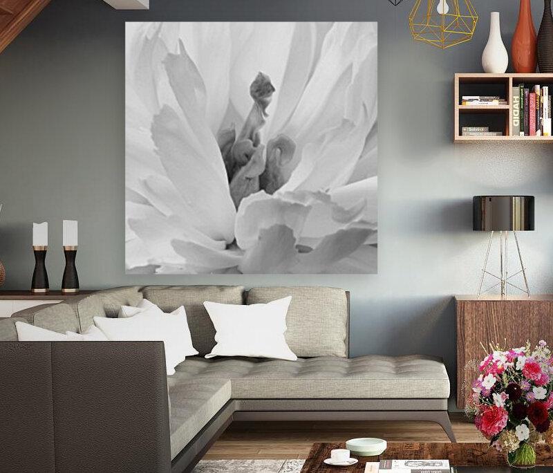 Peony III Black and White  Art