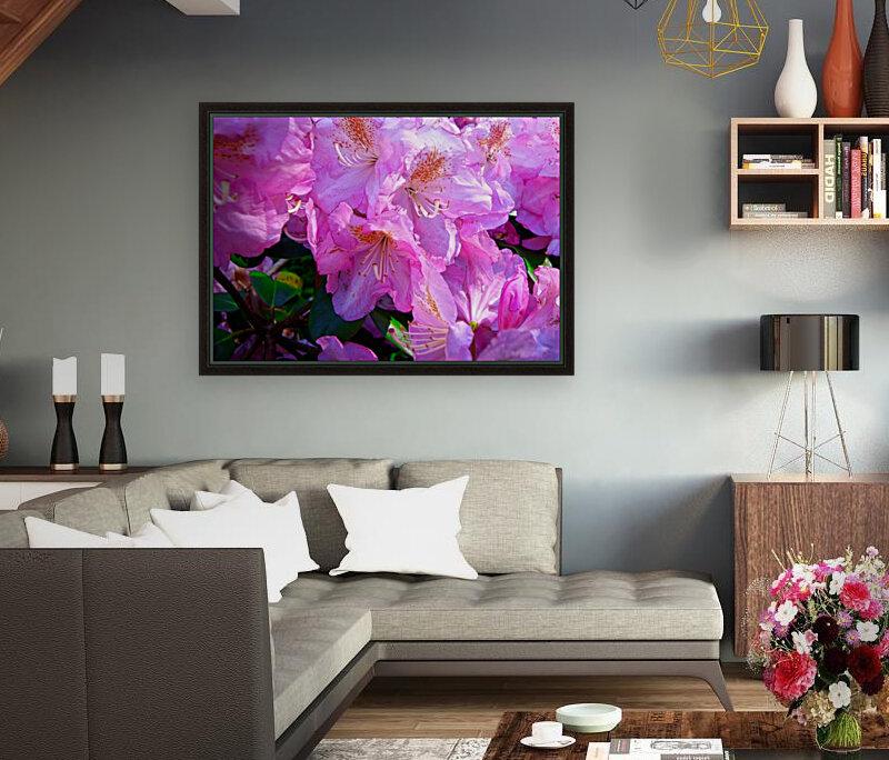 PINK FLOWER  Art