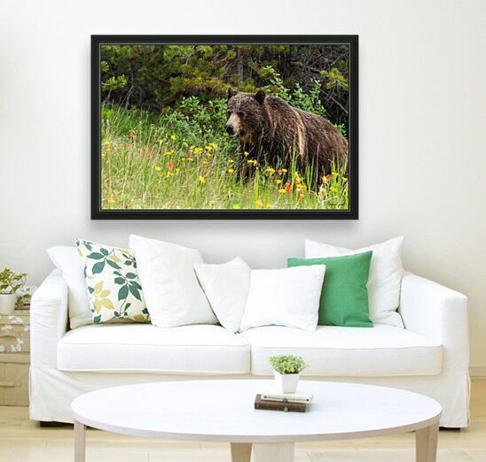 Grizzly Bear Sow 142  IMG_5130  Art