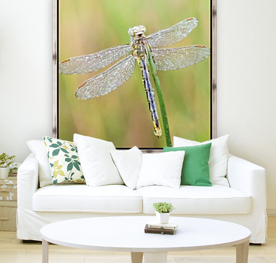 An Fire dragonfly  Art