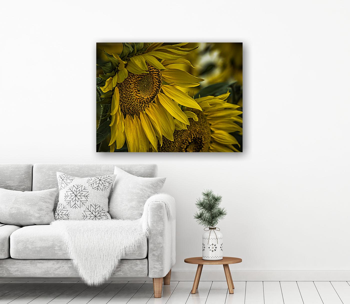 Sunflower Dawn   Art