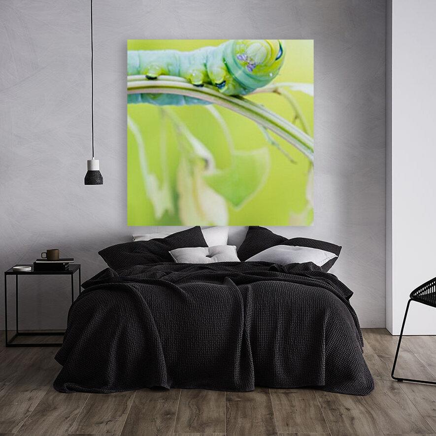 an Daphnis Nerii  Art