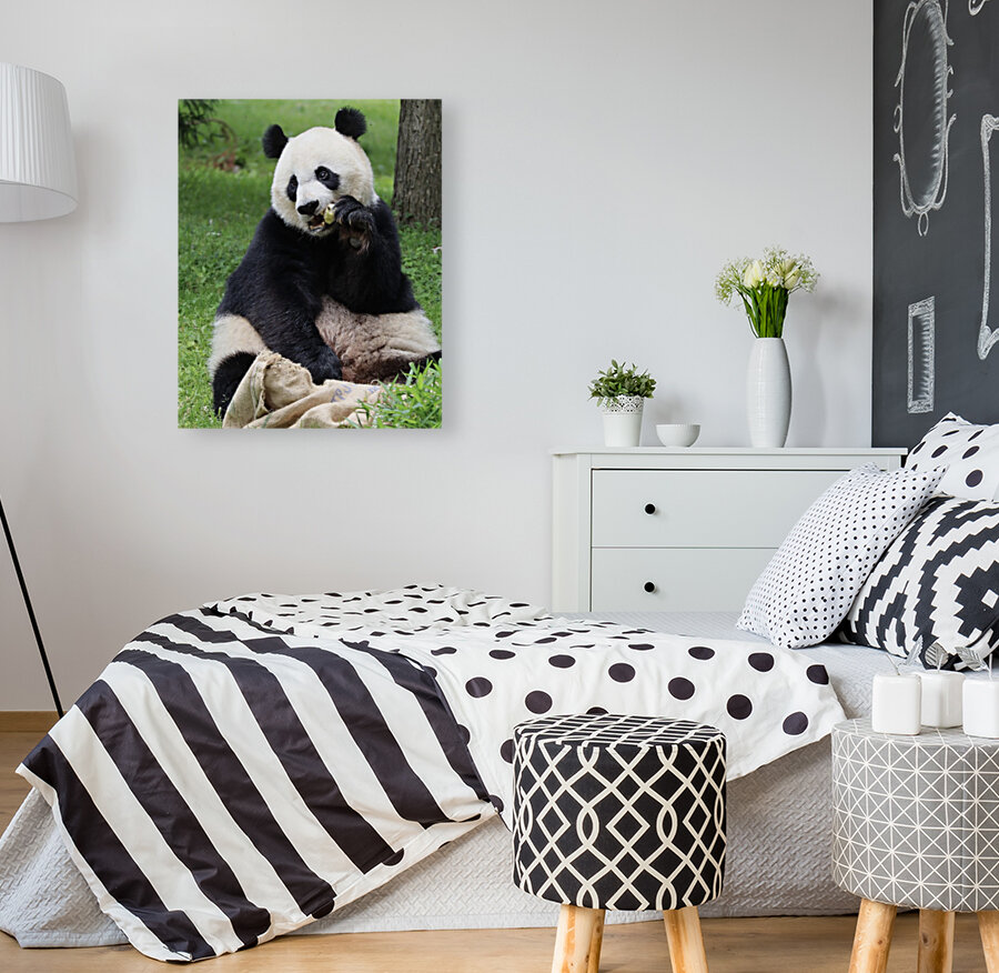 Panda with Floating Frame