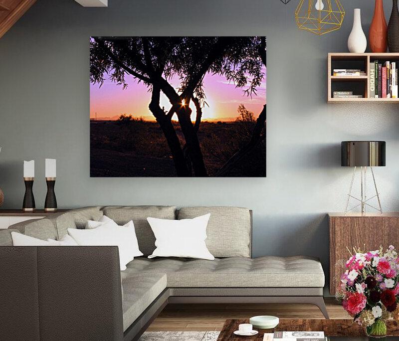 Tamarisk Sunset  Art