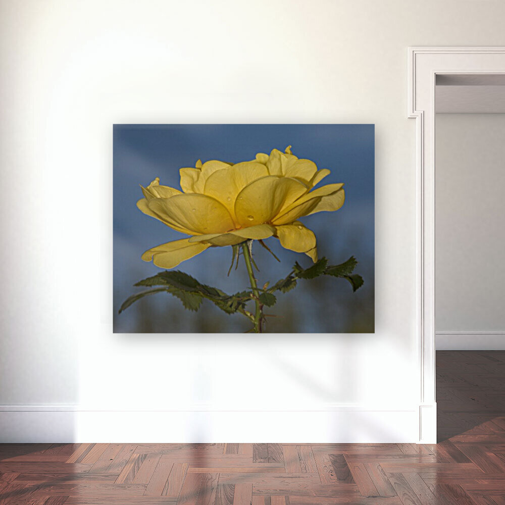 Yellow Rose Landscape  Art