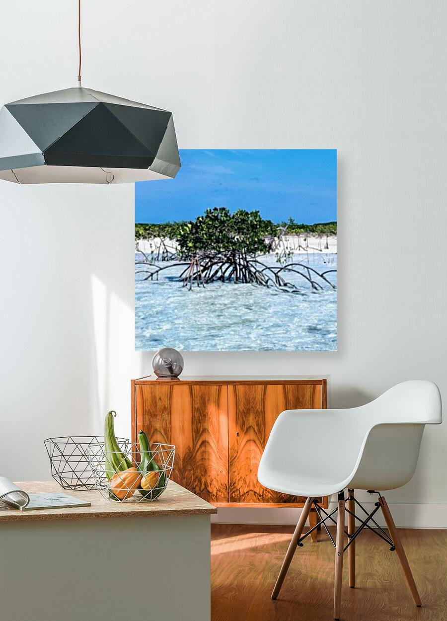 Mangroves in Estuary  Art
